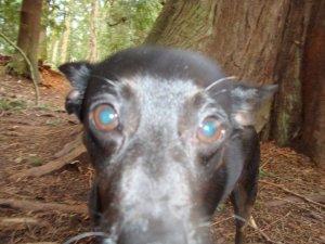 Frankie as Warthog Closeup